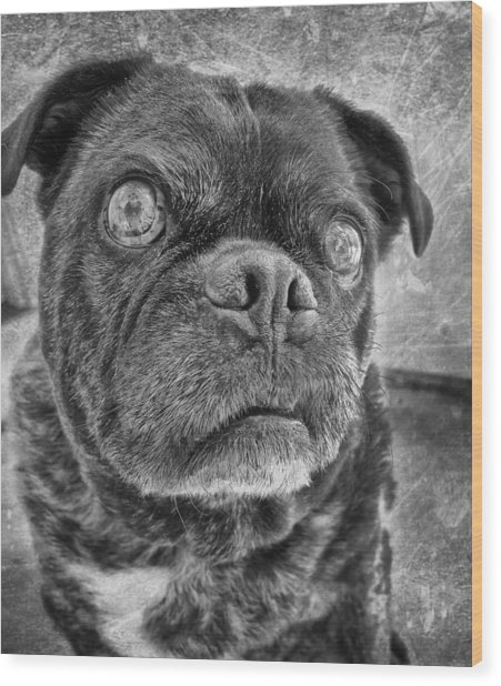 Funny Pug Wood Print by Larry Marshall