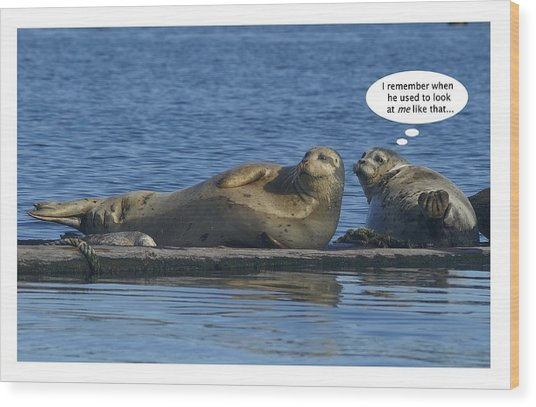 Funny Seals Wood Print