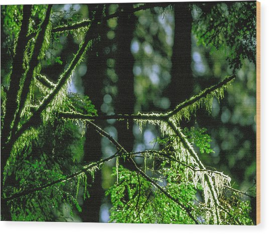 Furry Branches Wood Print by Kim Lessel