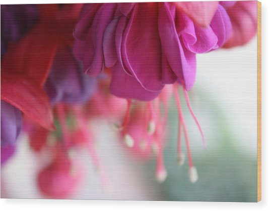 Fuschia Wood Print by Maria Schaefers