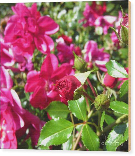 Fuschia Roses Wood Print