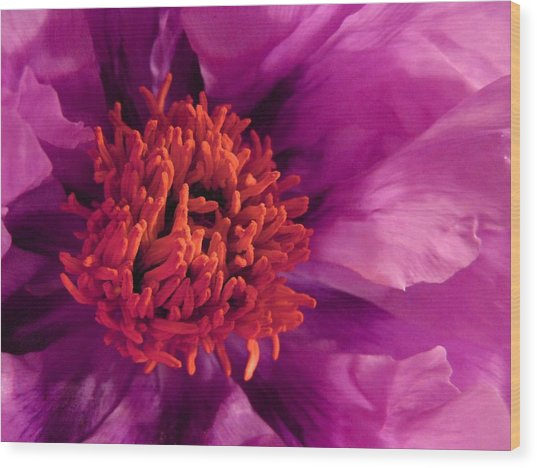 Fuschia Surprise Wood Print