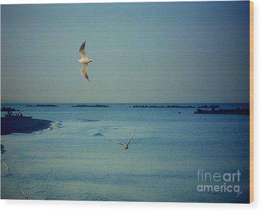 Gabbiani - Seagulls Wood Print