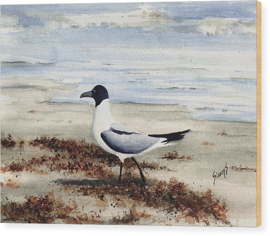 Galveston Gull Wood Print