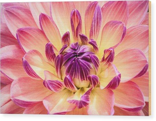 Garden Dahlia Wood Print