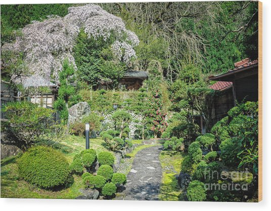 Garden Of A Japanese Ryokan With Sakura - Cherry Blossom Wood Print