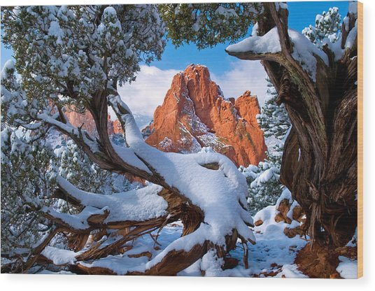 Garden Of The Gods Framed By Juniper Trees Wood Print