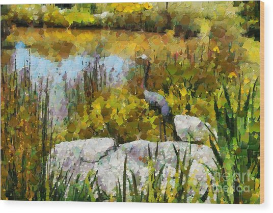 Garden Pond Wood Print by Fran Woods
