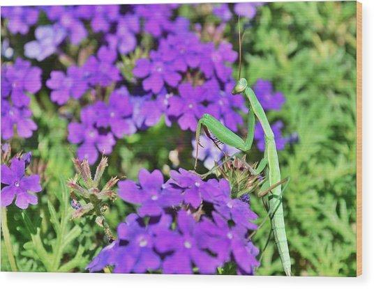Garden Prayer Wood Print