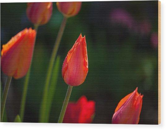 Garden Tulips Wood Print