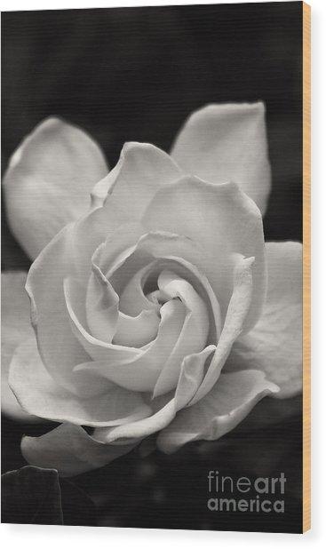 Gardenia Bloom In Sepia Wood Print