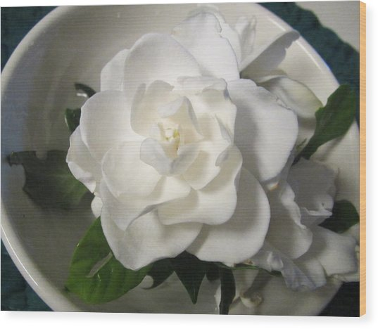Gardenia Bowl Wood Print