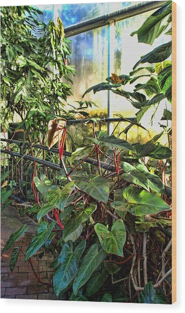 Gardens Wood Print