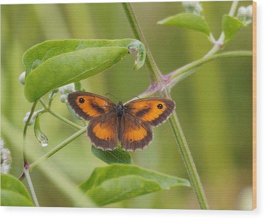 Gatekeeper Butterfly -01 Wood Print