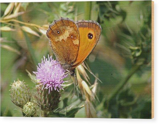 Gatekeeper Butterfly Wood Print