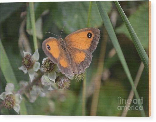 Gatekeeper Butteryfly Wood Print