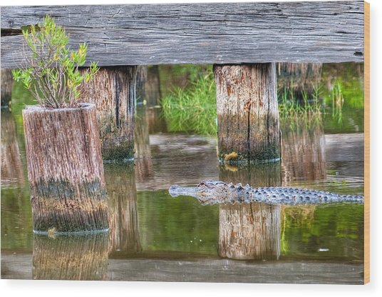 Gator At The Old Trestle Wood Print
