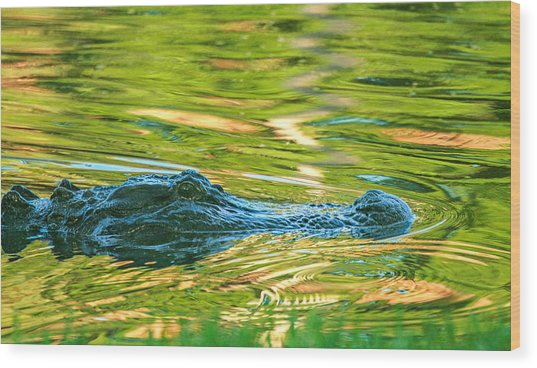 Gator In Pond Wood Print