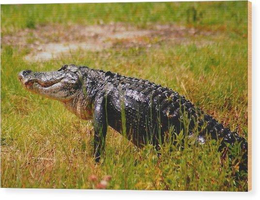 Gator Raid Wood Print by Miles Stites