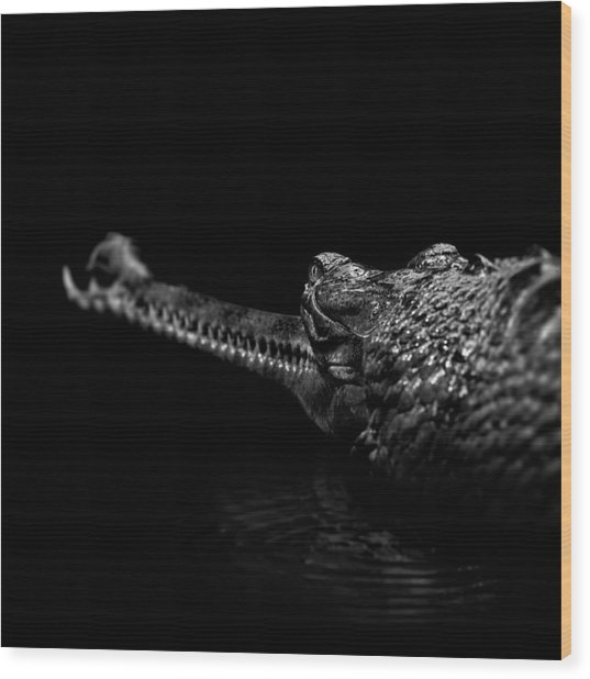 Portrait Of Gavial In Black And White Wood Print