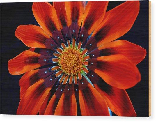 Gazania Flower Wood Print by Larry Harper