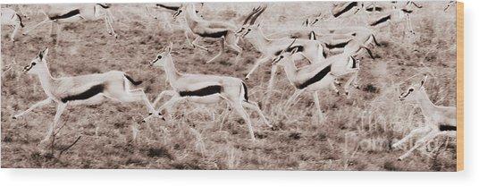 Gazelles Running Wood Print