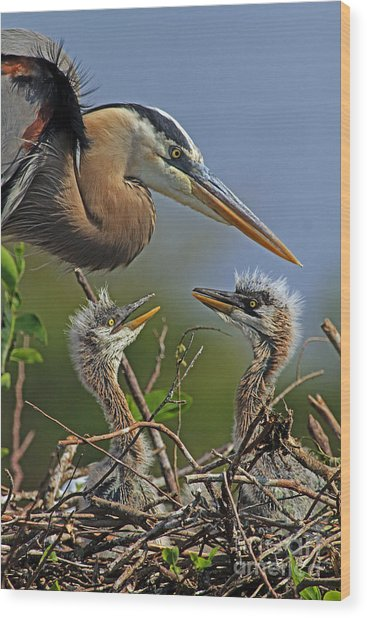 Great Blue Heron Twins Wood Print