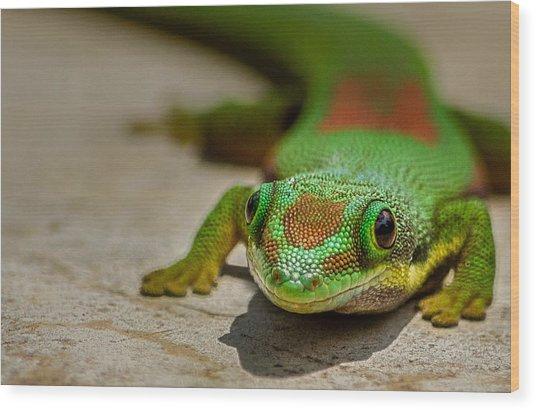Gecko Portrait Wood Print