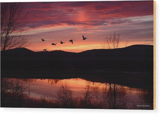 Geese After Sunset Wood Print