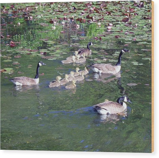 Geese And Goslings Wood Print