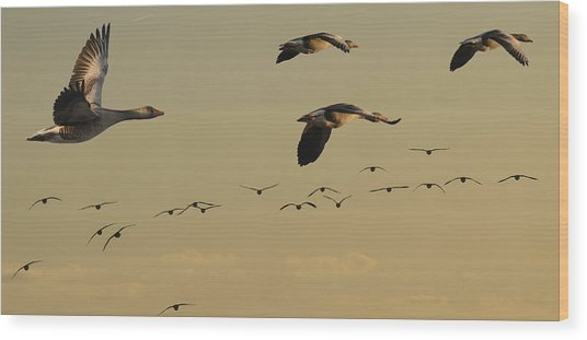 Geese Charter Wood Print