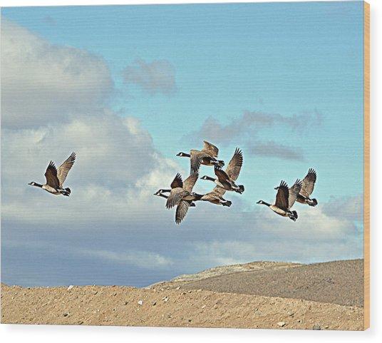 Geese In Flight Wood Print