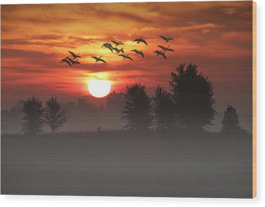 Geese On A Foggy Morning Sunrise Wood Print