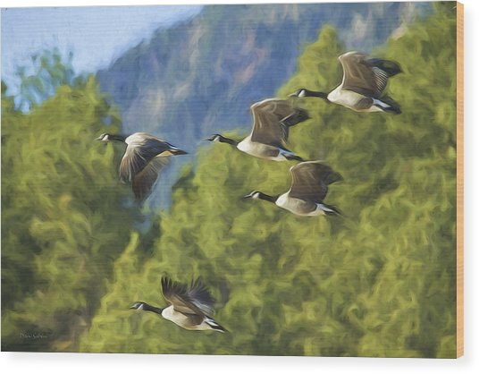 Geese On A Mission Wood Print