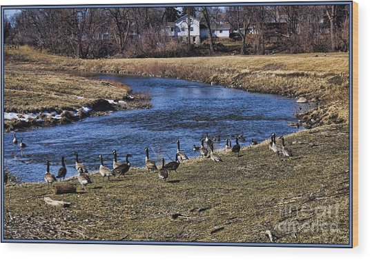 Geese On The Creek Wood Print