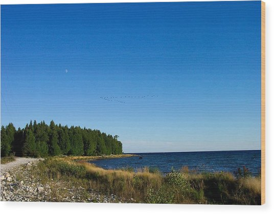 Geese Over Cana Island Wood Print by Pamela Schreckengost