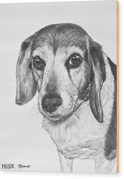 Gentle Beagle Wood Print