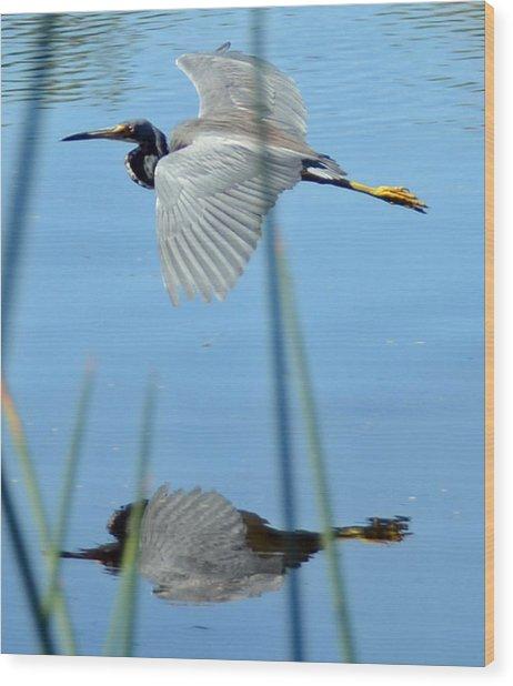 Gentle Flight Wood Print by Julie Cameron