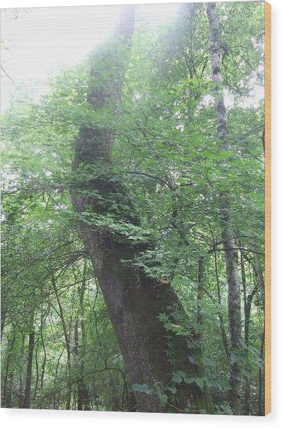 Gentle Giant Wood Print by Joe Bledsoe