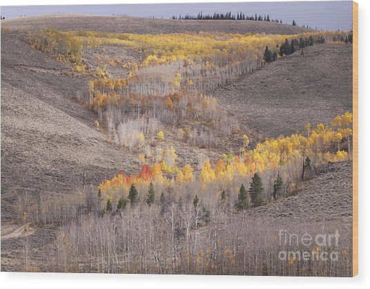 Geometric Autumn Patterns In The Rockies Wood Print