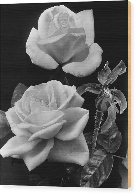 'george Arends' Roses Wood Print
