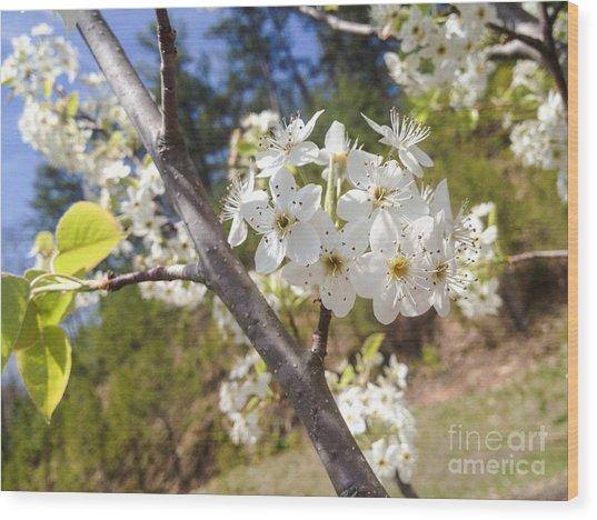 Georgia Blossoms Wood Print