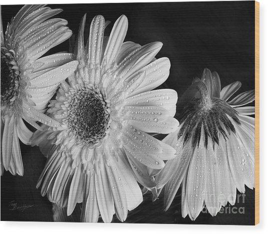 Gerbera Daisies Black And White Wood Print by Tom Brickhouse