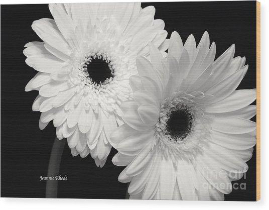 Gerbera Daisy Sisters Wood Print