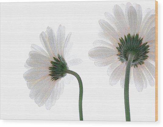 Gerbera Daisy I Wood Print
