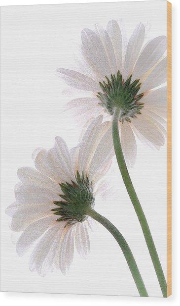 Gerbera Daisy II Wood Print