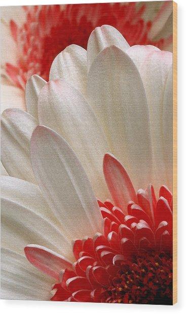Gerbera Daisy Iv Wood Print