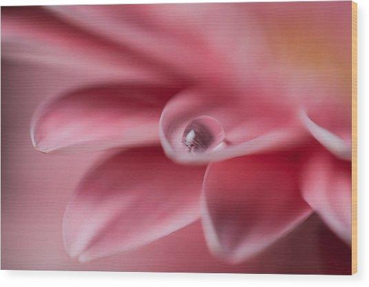 Gerbera With Water Droplet Wood Print