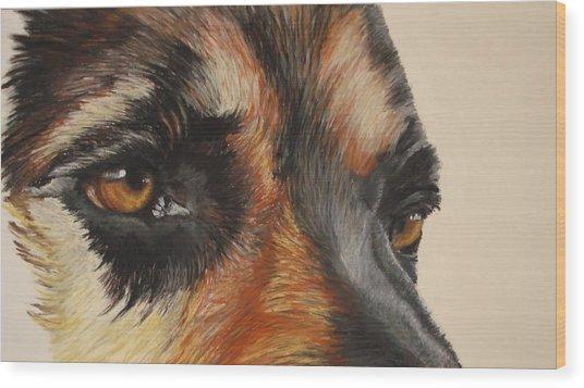 German Shepherd Gaze Wood Print by Ann Marie Chaffin