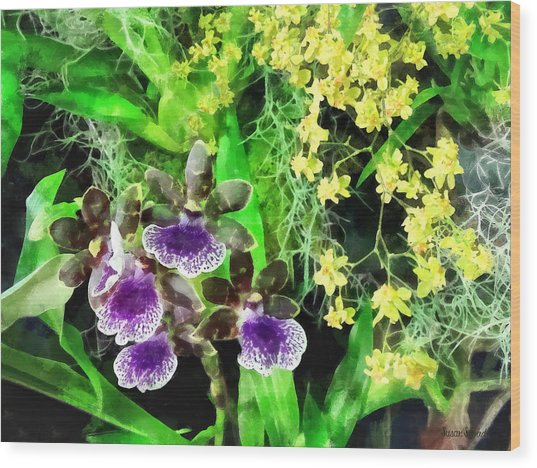 Geyser Jaimie And Golden Fantasy Orchids Wood Print by Susan Savad